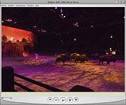 Bisons de la légende de Buffalo Bill