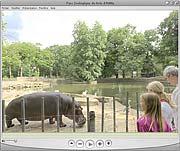 Hippopotames en famille