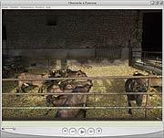 Chèvrerie de la ferme de la Vallière